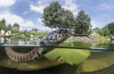 UPY2019 - de top tien Brits water Groothoek