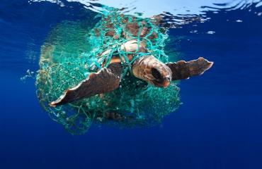 UPY2019 - de top tien Marine Conservation