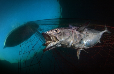 UPY2020-winnaars - Marine Conservation