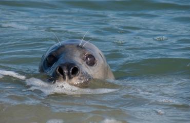 Ad Aleman - Portretten van zeehonden