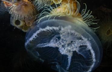Het is zo mooi vlak onder het Zeeuwse wateroppervlak
