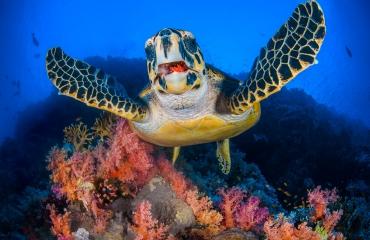 Alex Mustard heeft tips voor beginnende onderwaterfotografen