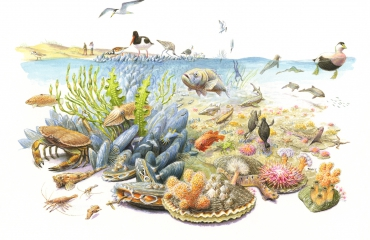 Wereld Natuur Fonds en ARK Natuurontwikkeling leggen bodem voor rijke natuur in Noordzee