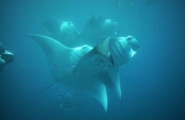 Berthold Raadsen - Diver's frenzy