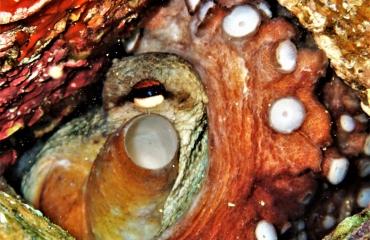 Berthold Raadsen - Middellandse Zee Rangatang krabbetje