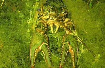 Berthold Raadsen - Rhapsody in Green