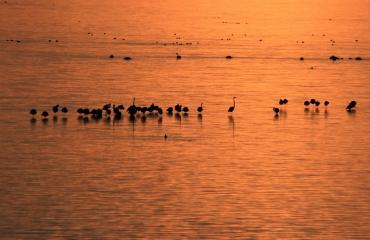 Berthold Raadsen - Drie duiken in Zeeland met flamingo's toe