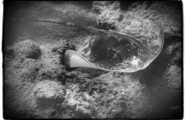 Voorbeeld van camerabijlage bij Handboek digitale onderwaterfotografie