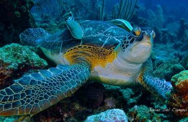 Zorgeloos op reis naar Bonaire en Curaçao