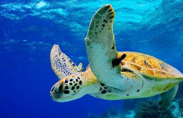 Spectaculaire Bonaire-aanbiedingen bij Diving World