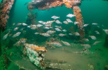 Nature Talks - De uitdagingen van fotografie in de Noordzee