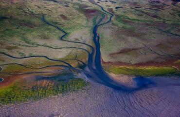 Herstel natuur in delta helpt Nederland beschermen tegen stijgende zeespiegel
