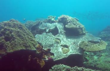 Tim de Haan - Crystal Bay bij Nusa Penida