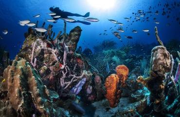 Curaçao in één oogopslag