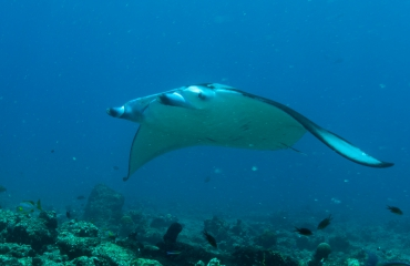 Leendert Smit - Naar de Maldiven met Dive Photo Guide