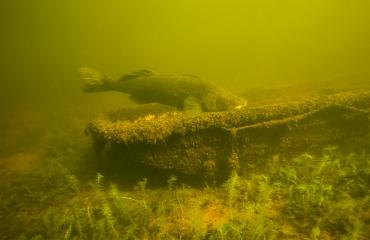Jan van Dijk - Snorkelduik naar een oude bekende