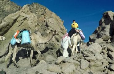 Dirk Van den Bergh - Met de kameel naar de duikstek