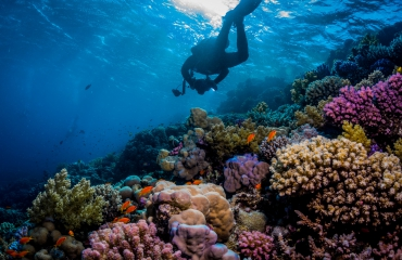 Win koraalvriendelijke zonnebrandcrème voor je volgende vakantie!