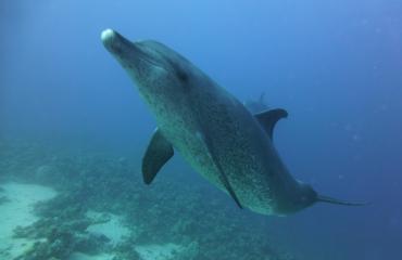 Susan Dogterom - Ik haat dolfijnen