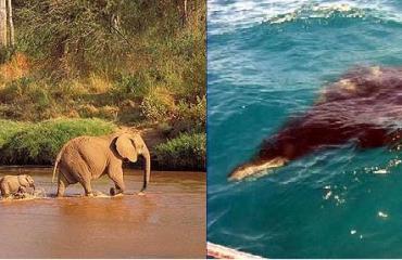 Saskia Uit den Bogaard - Safari boven én onder water in Kenia (1)