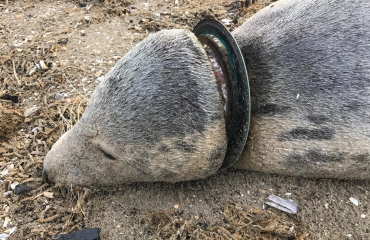 Plastic in zee eist weer twee slachtoffers