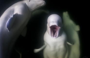 The scream - Het verhaal achter de foto