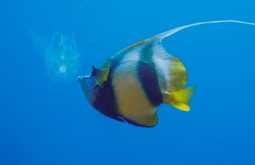 Red Sea Photo Experience van start