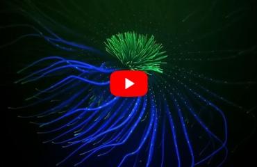 In beeld: Fluorescentie onder water in Schotland
