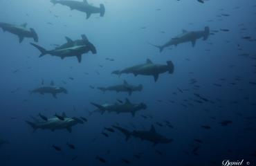 Yo nadé con tiburones y sobrevivi
