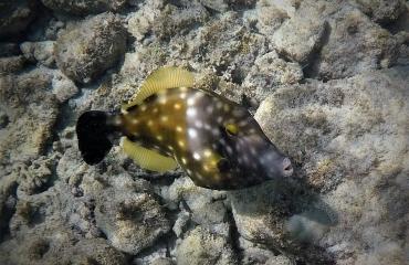 Bert Peters - Wrakduik Aruba
