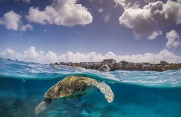 Specialty-tip: Sea Turtle Awareness