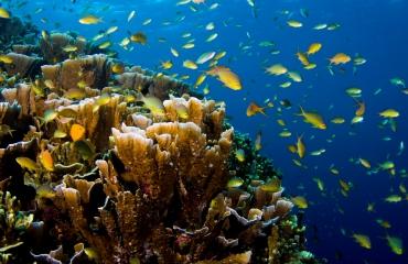 Vlaamse duiker omgekomen in Egypte
