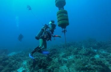 Zeezoogdieren Saba Bank worden bestudeerd aan de hand van geluid