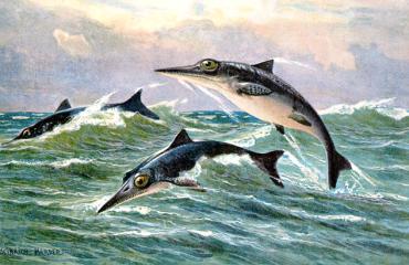 Ichthyosaurus heerste in prehistorische oceaan door goede neus