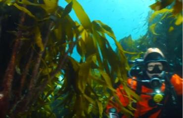 Vlog 'In de Noordzee' - Kelp en koraal