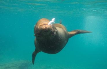 Jeanette Zoetendal - Galapagos-reis