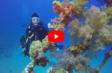 Jeroen Albrecht - Duikvakantie in de Rode Zee