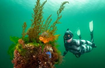 Freediven met snotolven