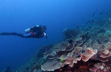 Op zoek naar nieuwe duikstekken