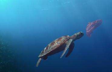 Video: Life below Water - de ontdekking van een nieuwe soort