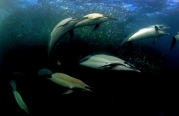 Film: Oxygene the ocean