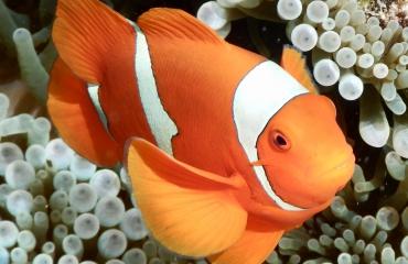 Oranje boven én oranje onder!