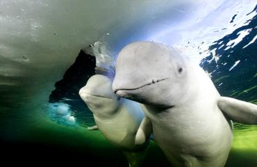 Bartosz Strozynski - Underwater Obsession op Nature Talks