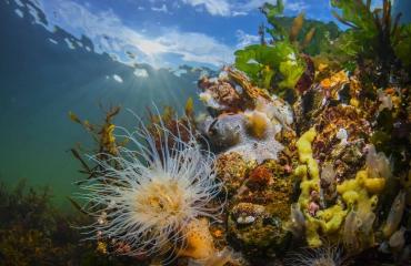 Onderwaterfotografie zonder duikbrevet