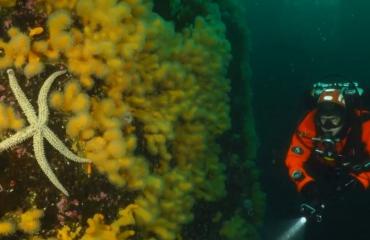 Vlog 'In de Noordzee' - Duiken met 20.000 jan-van-genten boven je hoofd