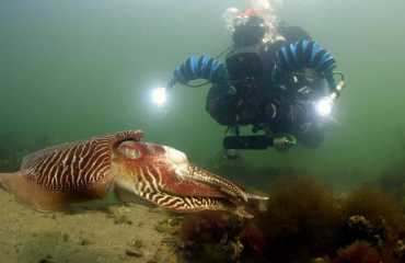 ONK Onderwaterfotografie 2018 - Starters - Beste foto