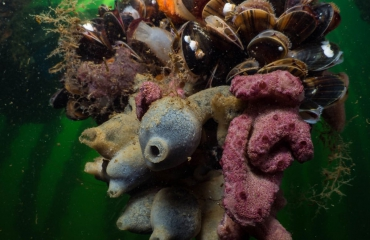 ONK Onderwaterfotografie 2019 - Teams