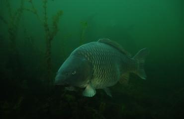ONK Onderwaterfotografie 2019 - Zoet water