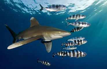 De grote zeedieren van de Malediven