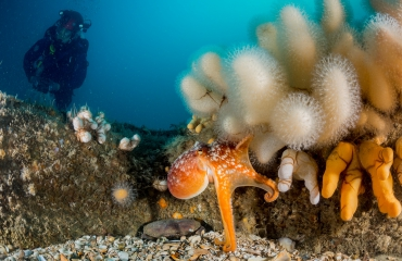 Duik de Noordzee schoon voor twaalfde keer op expeditie